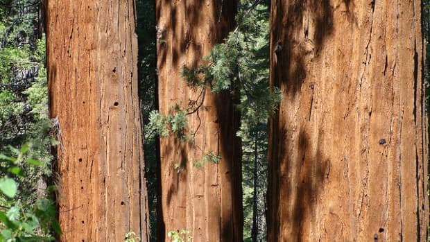 calaverasbigtreesstatepark--california