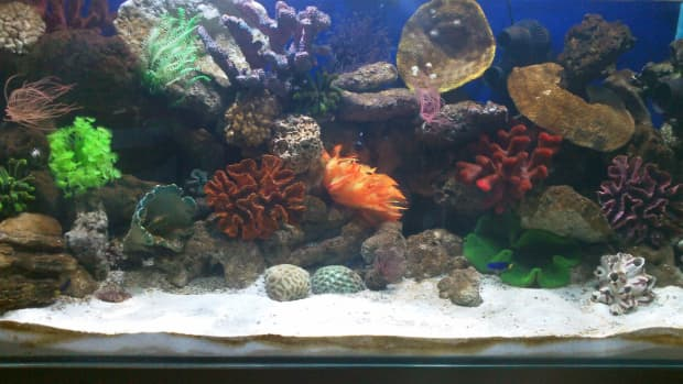 how-to-set-up-your-first-marine-reef-aquarium