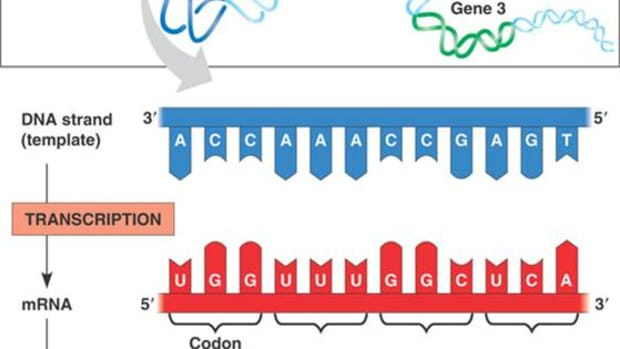 protein-production-a-step-by-step-illustrated-guide