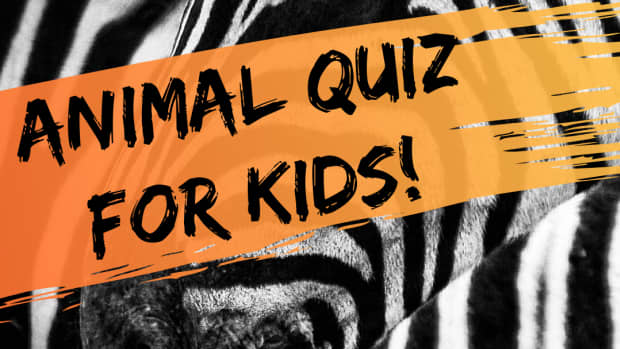 multiple-choice-quiz-how-well-do-you-know-animals-suitable-for-kids