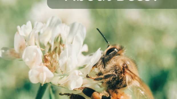 dreams-about-bees-meaning-of-bees-in-dreams