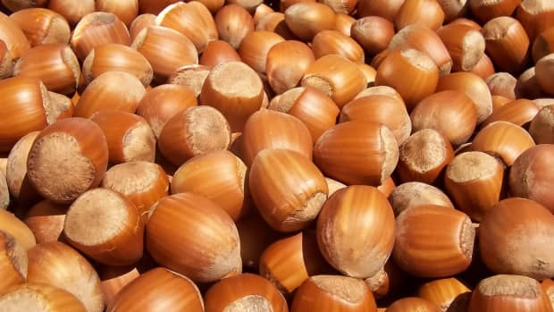 hazel-trees-and-hazelnuts-for-a-nutritious-flour-butter-and-oil
