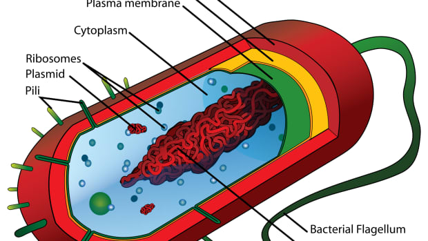 what-are-cells-made-of-prokaryotic-cell-structure-part-3-of-3