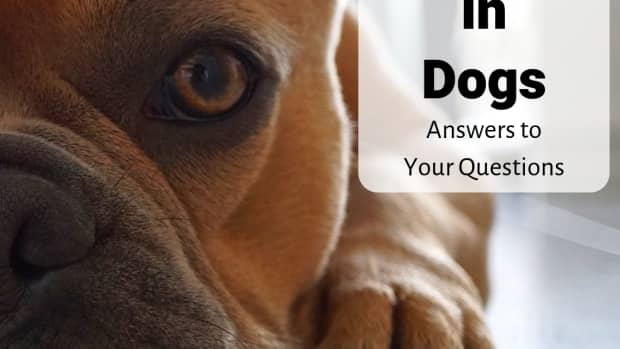 canine-epilepsy-expert-answers-to-your-frequently-asked-questions