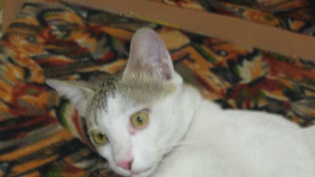 they-killed-my-pet-cat-minni-maav
