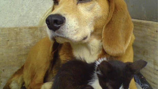 how-to-introduce-your-new-kitten-to-your-dog-dogs-and-cats-can-get-along
