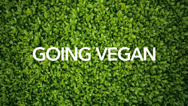 the-reason-for-going-vegan-food-for-thought