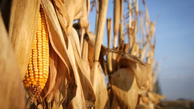 inferiority-of-corn-based-ethanol