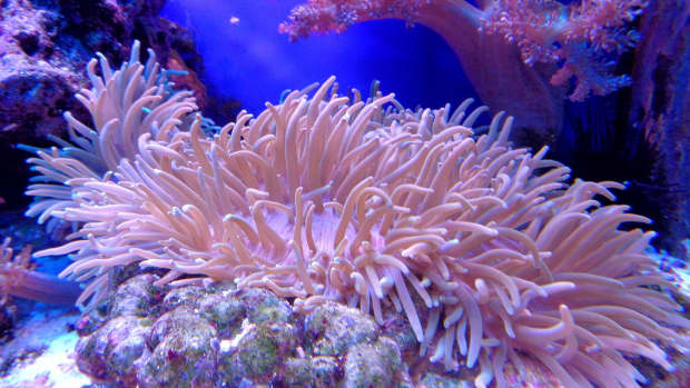 protecting-coral-reefs