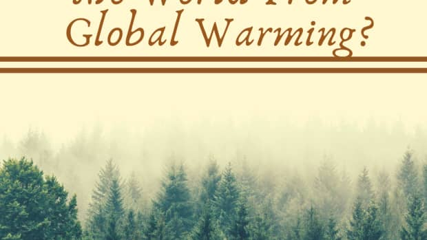 will-plants-save-the-world-from-global-warming