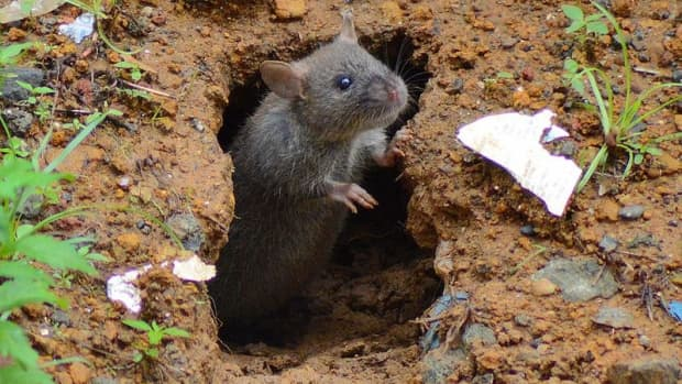 what-is-a-rat-hole