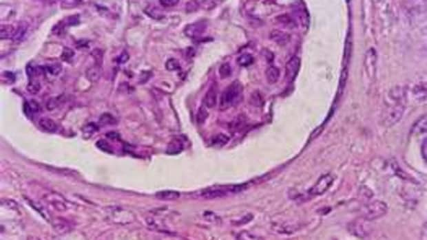 what-is-histology
