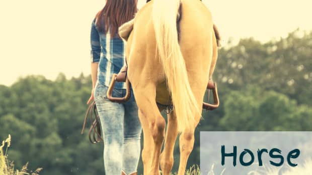 horsetailuse