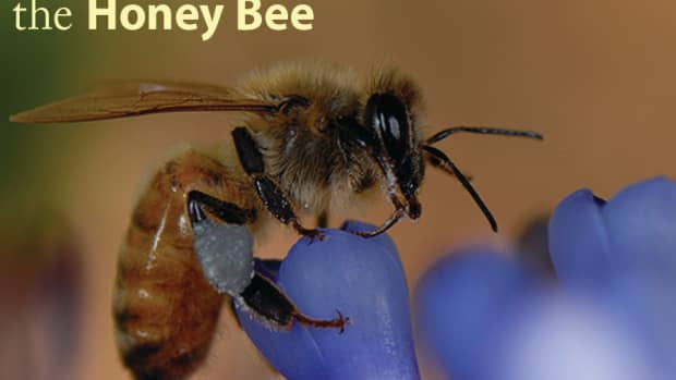 colony-collapse-disorder-what-is-it-and-how-can-we-stop-it