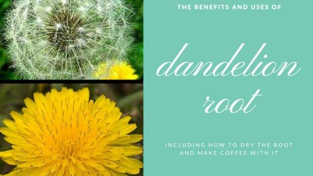 health-benefits-of-dandelion-root