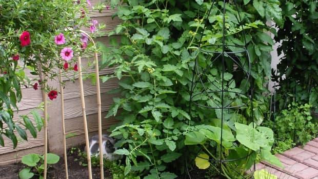 designing-my-patio-garden