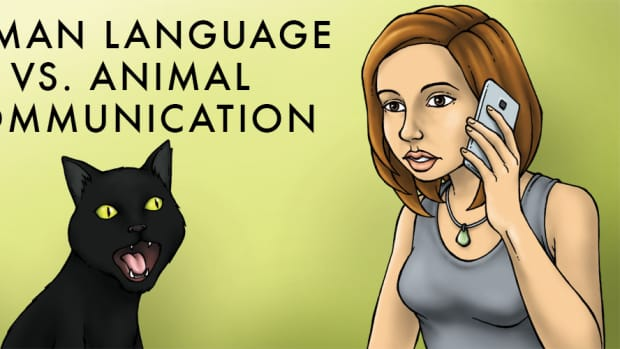 the-difference-between-animal-and-human-communication