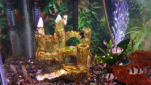 how-to-get-rid-of-brown-algae-or-diatoms-in-freshwater-aquaria