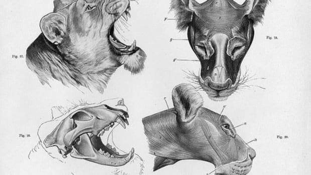 animal-anatomy