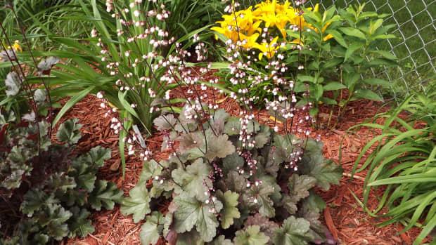 how-to-plan-a-perennial-flower-garden