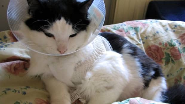 basic-care-of-your-dog-or-cat-after-surgery
