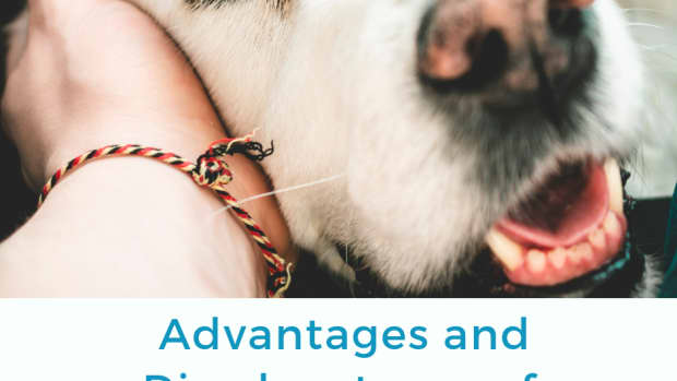 adopting-older-dogs
