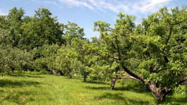 fruit-and-nut-producing-trees-for-usda-hardiness-zone-8b