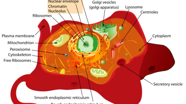 what-are-cells-made-of-eukaryotic-plant-cells-part-1-of-2