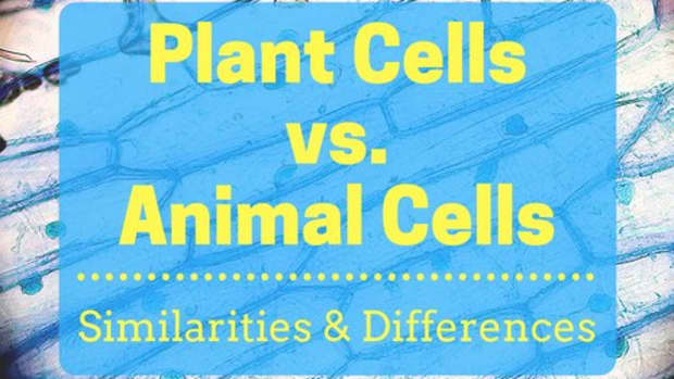 plant-cells-vs-animal-cells-with-diagrams