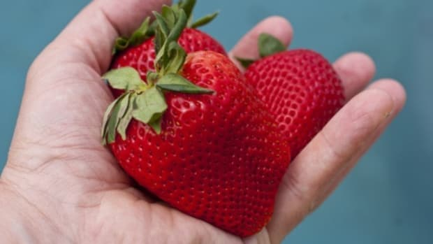 how-to-plant-and-grow-strawberries