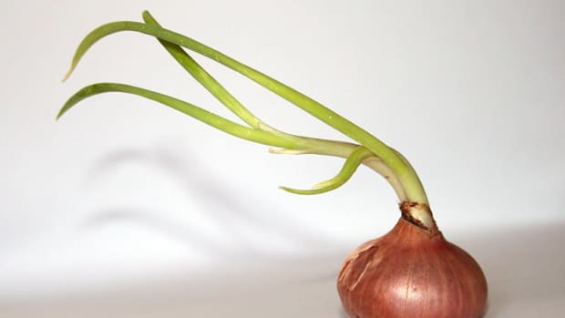 what-to-do-with-a-sprouted-onion