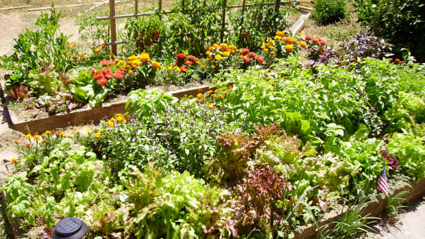 plants-that-repel-insects-in-gardens