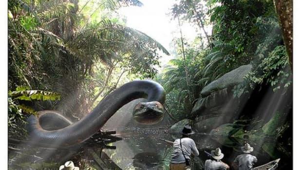 titanoboa-the-worlds-largest-snake-ever