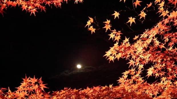 japanese-maple-trees