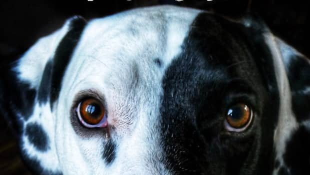 how-to-correct-bad-behavior-in-dogs