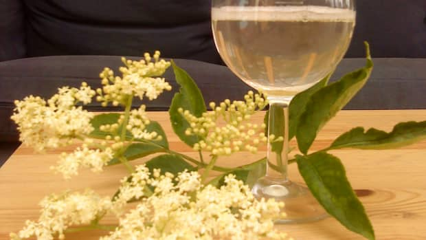 how-to-make-elderflower-champagne