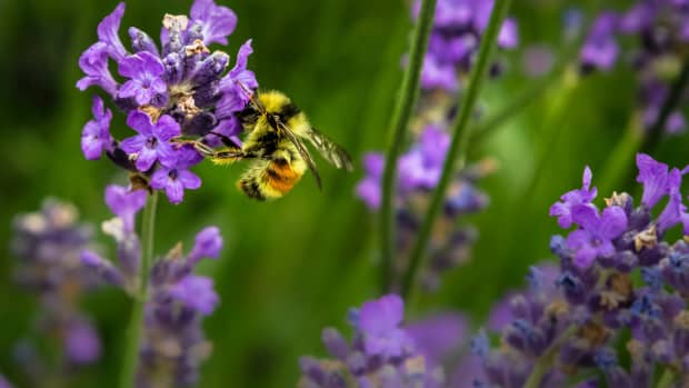 how-to-avoid-bee-and-wasp-stings