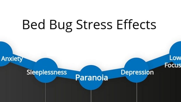 is-there-a-stress-disorder-for-bed-bugs