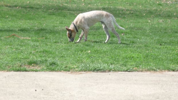 how-to-get-a-hound-dog-to-stop-digging