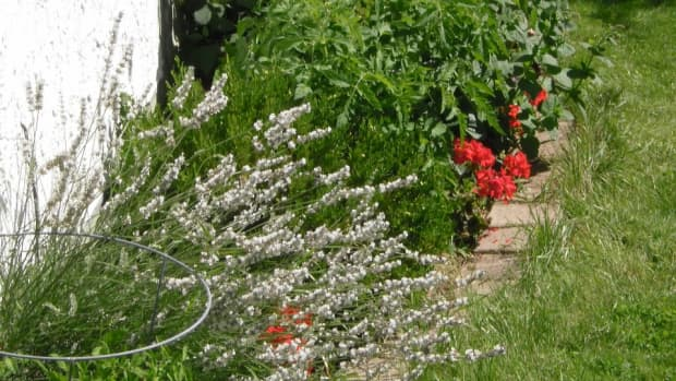 20-best-plants-for-sun-with-summer-flowers