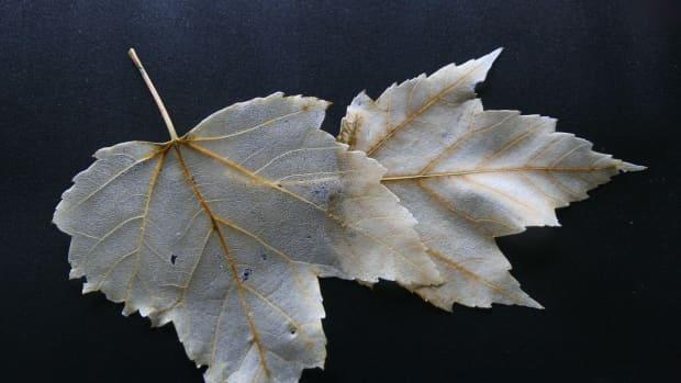 how-to-make-skeleton-leaves