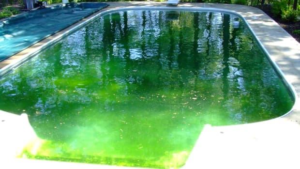 worst-pool-algae