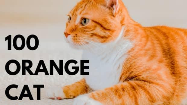 what-are-good-orange-cat-names