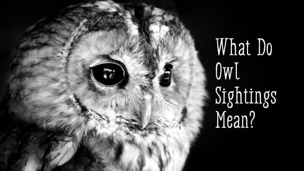 owls-facts-symbolism-and-meaning