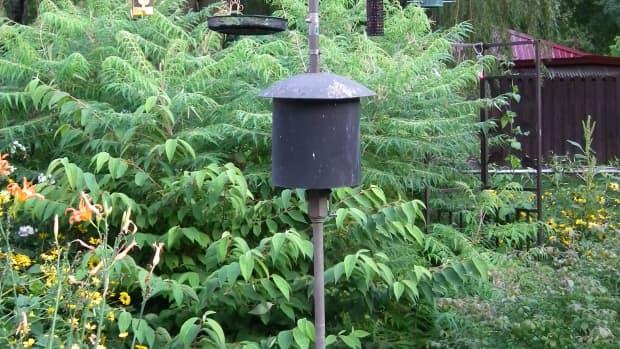 bird--feeder-pole
