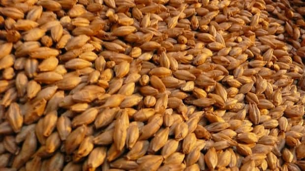 cooking-with-barley-what-is-barley-what-are-the-types-of-barley