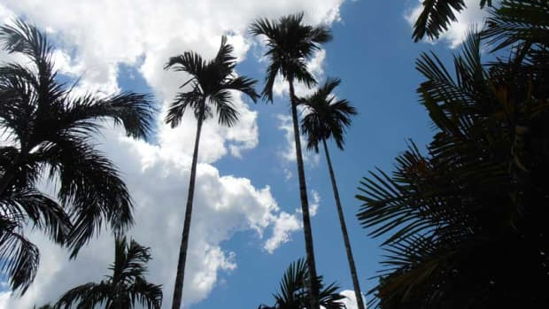 about-palm-trees
