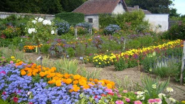 flowers-and-seasons