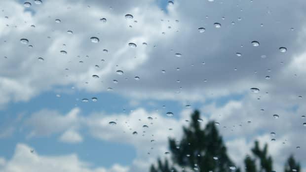 the-rainmaker-pseudomonas-syringae