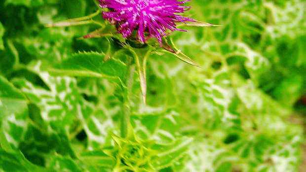 how-to-forage-and-why-foraging-is-good-for-your-health